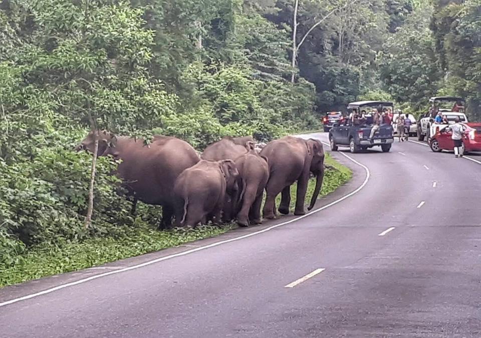ช้างเขาใหญ่ 4