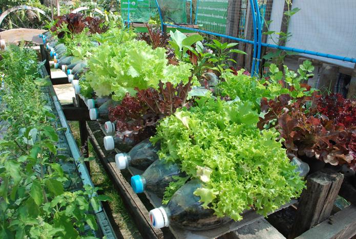 เกษตรต้นแบบชุมชนเมืองweb-12