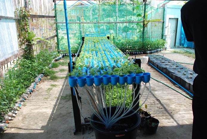 เกษตรต้นแบบชุมชนเมืองweb-9