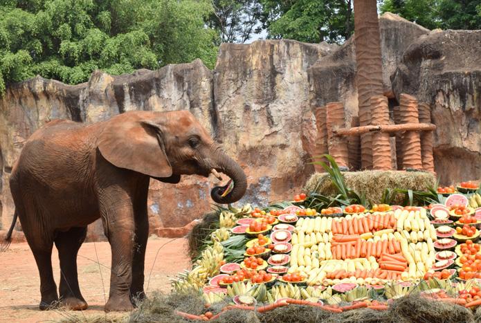 วันเกิดลูกช้างแอฟริกา-2