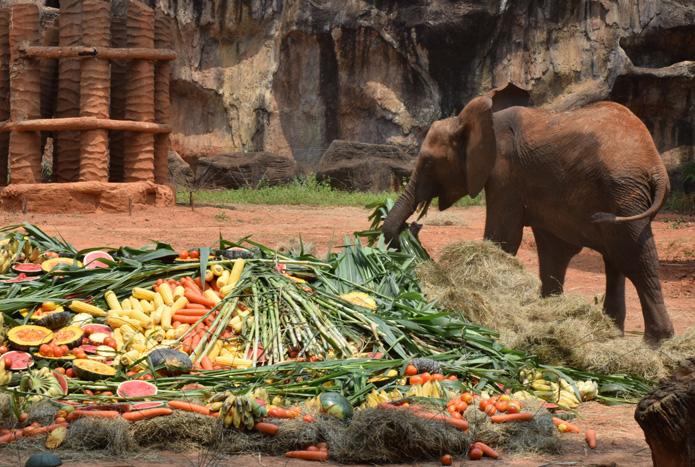 วันเกิดลูกช้างแอฟริกา-3