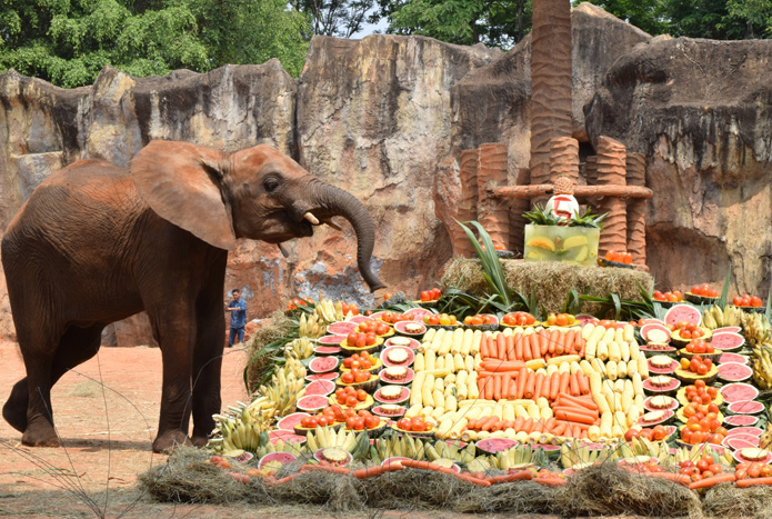 วันเกิดลูกช้างแอฟริกา-4