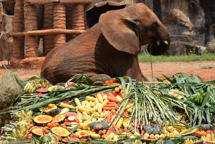 วันเกิดลูกช้างแอฟริกา-6