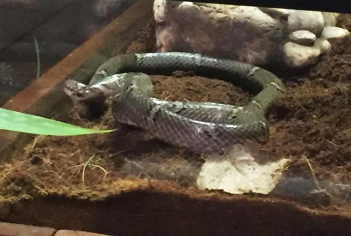 งูปี่แก้วไทรโยคสัตว์ค้นพบใหม่2