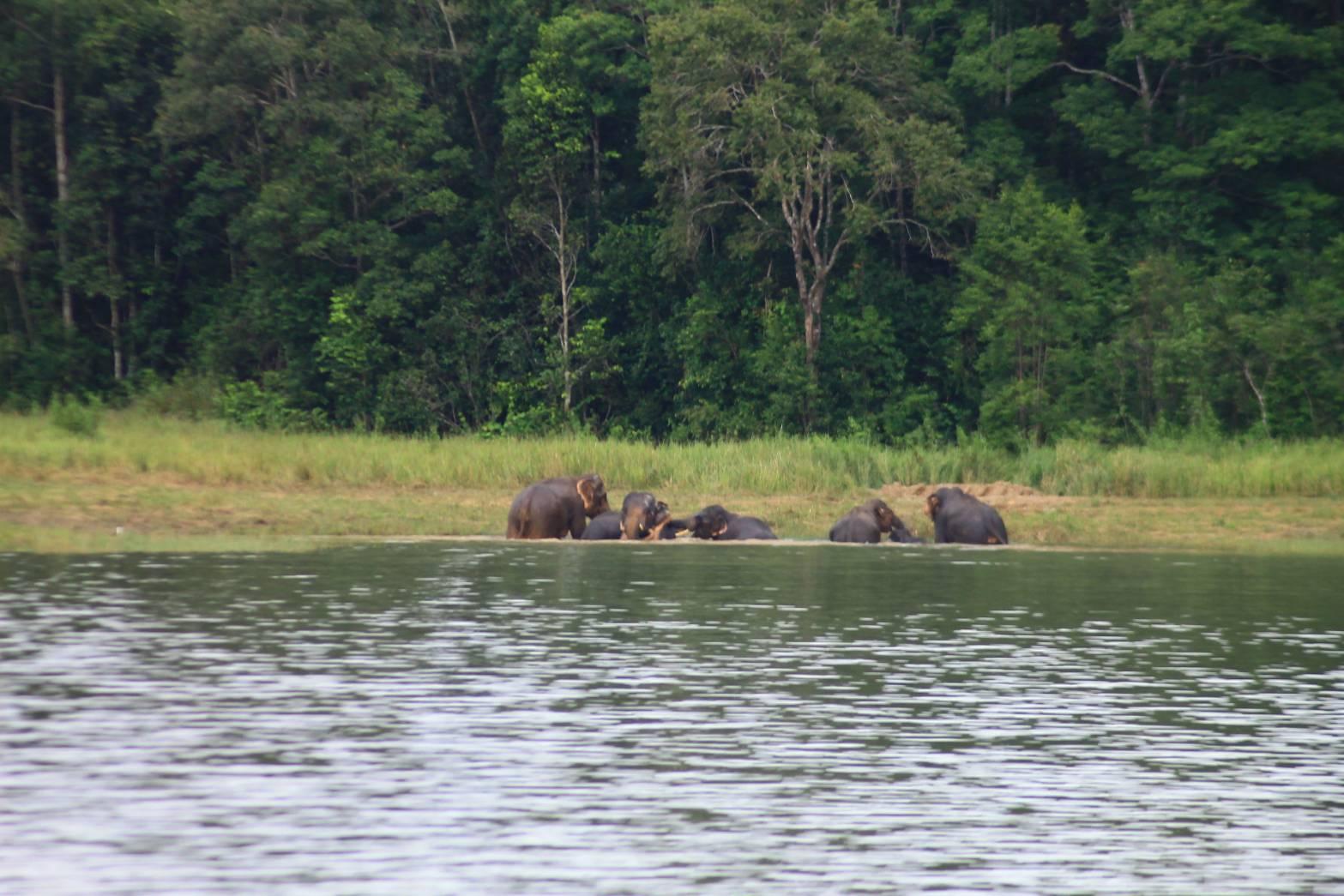 มุมน่ารัก! ช้างป่าเขาใหญ่ลงเล่นน้ำ นทท.ตื่นเต้นแห่ถ่ายภาพ จนท.เตือนระวังช่วงนี้ช้างตกมัน (มีคลิป)