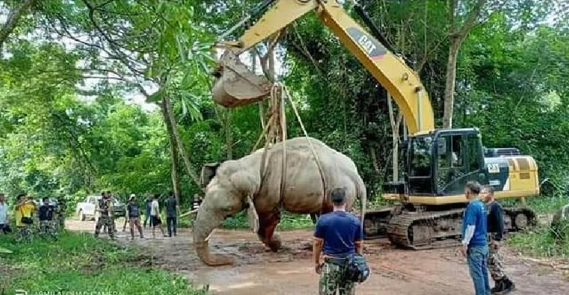"""ฝังซาก! """"ช้างป่าเขาใหญ่"""" ถูกไฟฟ้าช็อตตาย  อุทยานฯ แจ้งความเอาผิดเจ้าของรีสอร์ทแล้ว"""