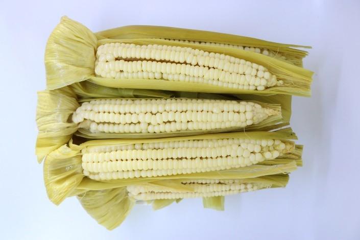 """ชู """"ข้าวโพดแปดแถวราชบุรี"""" สุดยอดพืชเกษตรภูมิปัญญาท้องถิ่น  เร่งต่อยอดเพิ่มมูลค่าสร้างรายได้เกษตรกร"""